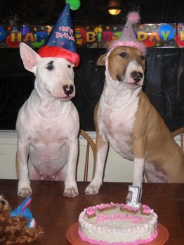 Sookie and Roxy, two dogs that are pet insurance enthusiasts, celebrate their birthday.