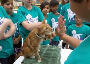 A cat gives a child a high five.