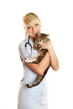 A pet with cat insurance gets an annual exam.