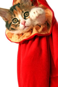 A cat with cat insurance is tucked into a red bag.