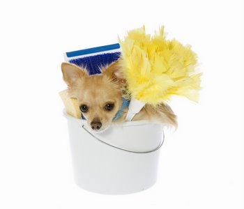 A dog with pet health insurance gets ready to spring clean.