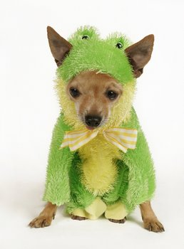 A dog with pet insurance wears a frog costume.