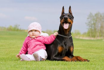 A baby sits with a large black dog.
