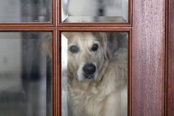 A dog waits at the door as someone approaches.