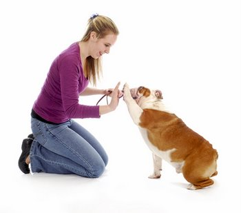 A girl teaches a dog how to do a trick.