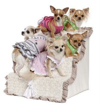 Five small Chihuahuas learn how to use doggie stairs.