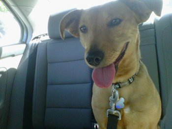 Jayda, a dog with dog insurance, goes on a car ride to celebrate National Dog Day.