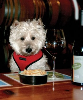 Hairy Putter, a pet insurance enthusiast, enjoys a meal at the table.