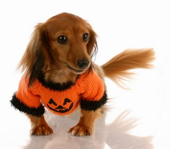 A dog with pet health insurance prepares for a safe Halloween.