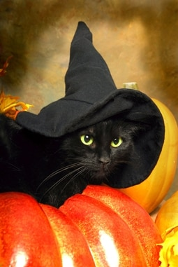 Halloween black cat with witch hat.