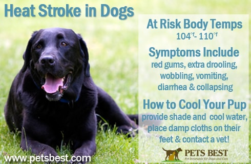 Signs of heat stroke in dogs.