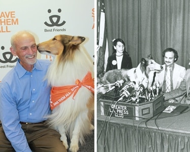Dr. Jack Stephens reunites with Lassie 32 years after presenting her the first pet insurance policy in North America.