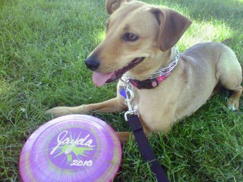 Jayda relaxes in the grass after a game of Frisbee.