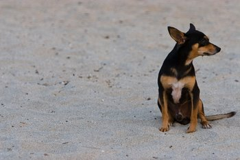 A lost dog sits alone on a beach.