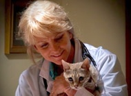 Dr. Matthews, one of the six 2012 4th quarter finalists for the My Vet's the Best nationwide contest.
