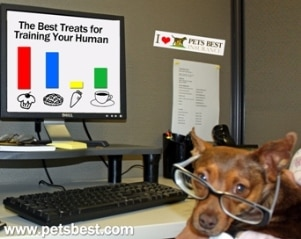 A dog at the Pets Best Insurance office helps the employee work.