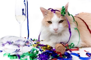 A cat with pet health insurance rings in the new year.