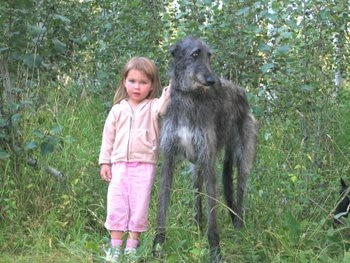 Obie the Scottish Deerhound sits with Ashley.