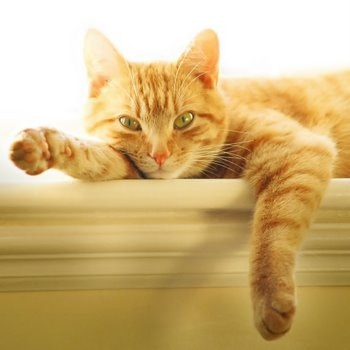 A cat with pet insurance sits on a ledge.