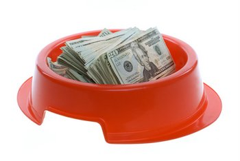 A dog bowl is filled with money.