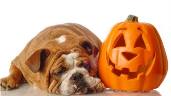 A dog with pet insurance is adopted durign the month of October.