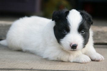 A puppy with dog insurance lies on the ground.