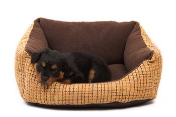 A puppy with pet insurance sits in a dog bed.