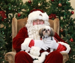 A dog poses with Santa Claus.