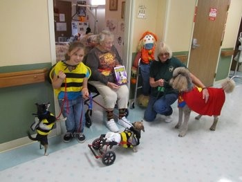 Schotzie and some other therapy dogs work their magic at a retirement home.