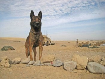 A soldier dogs stands guard.