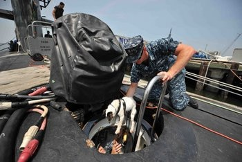 A soldier dog gets in a submarine.