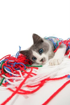 A small cat plays with string.