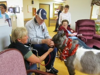 Thunder Pants, the mini horse, visits a senior care facility.