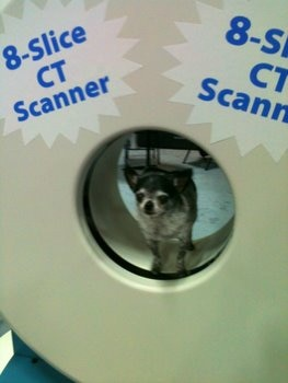 Torrey, a pet insurance enthusiast, stands in a pet MRI machine.