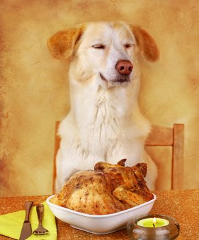 A dog with pet health insurance gets ready to eat a turkey dinner.