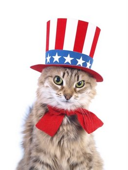 A cat with pet health insurance wears a red, white and blue hat to celebrate July 4th.