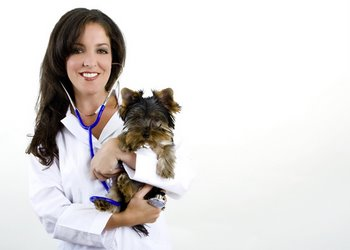 A vet holds a pet with dog insurance.