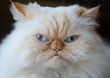 a very annoyed cat