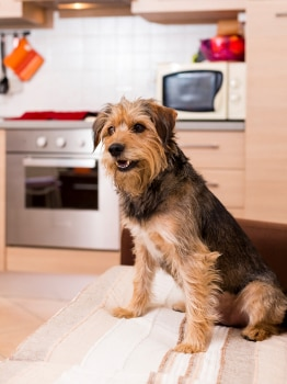 Choose the right sized dog breed for your apartment.