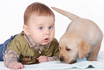 A baby and puppy with dog insurance get to know each other.