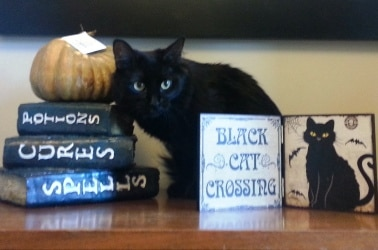 A black cat sits by a sign that says black cat crossing.