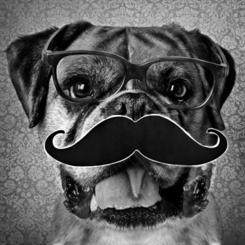 A Boxer breed dog wears glasses and a fake mustache.