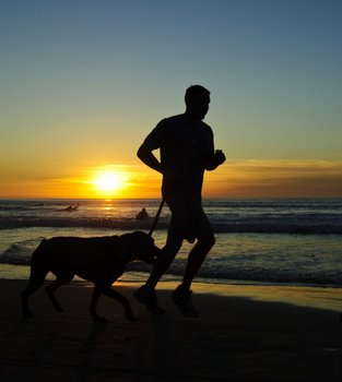 A dog with pet health insurance runs on the beach with his master.