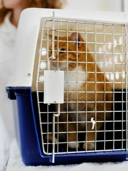Cat insurance can help pay for routine visits to keep your cat healthy.