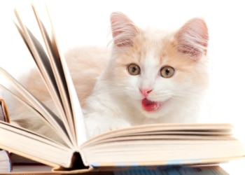 cat sitting on a book