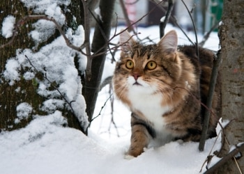 A cat outside in lots of snow.