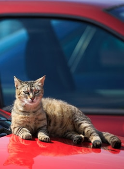 Plan ahead to move with your cat or take her on a pet-friendly vacation.