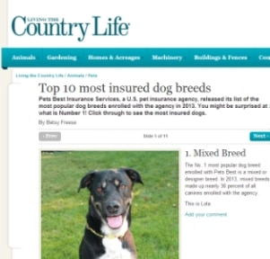 Pets Best featured in the Living the Country Life discussing the most popular dog breeds.