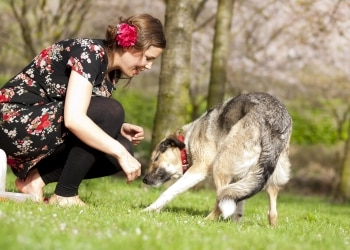 A dog growls while still wagging its tail as it plays with its owner.