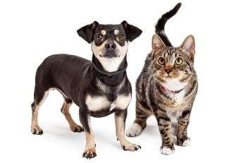 A dog and cat with pet health insurance from Pets Best.